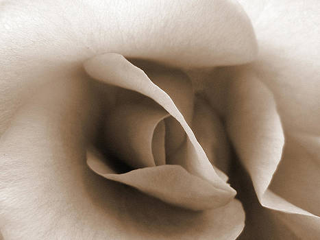Sepia Rose by Janet Kearns