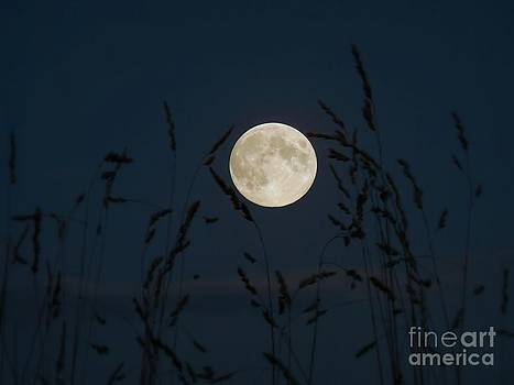September Moon by J J  Everson