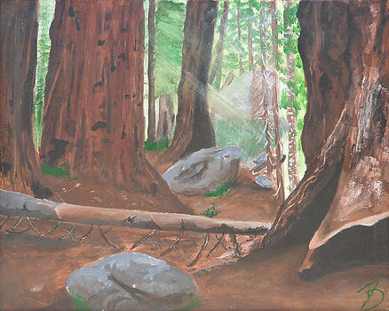 Sequoia by Travis Day
