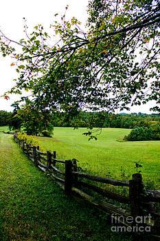Serene Pasture by Tom Carriker