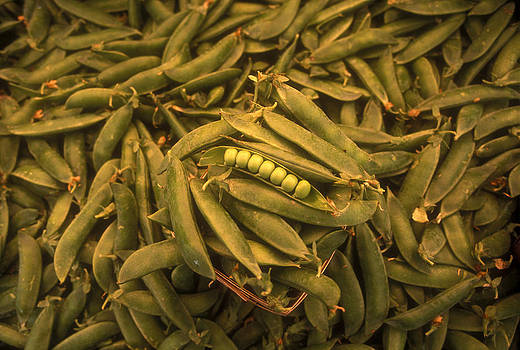 Seven Peas In A Pod, On A Pile Of Pea Pods by Lyle Leduc
