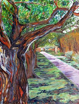 Shaded Walking Trail by Hannah Curran