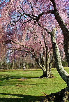 Byron Varvarigos - Shades Of Spring