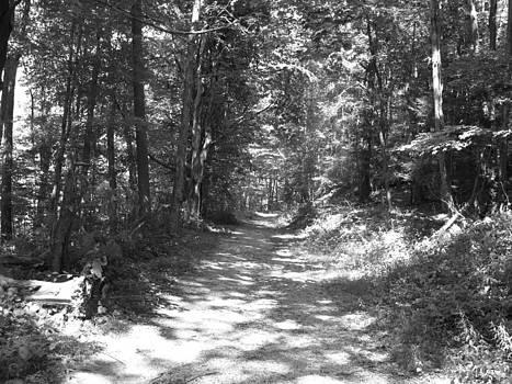Shadow Path by Barbara Ferreira