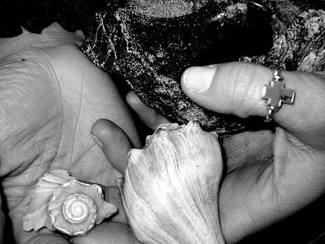 She Sells Seashells... by Lyn Calahorrano