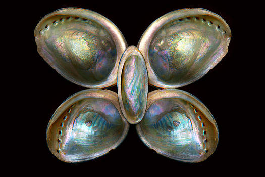 Mike Savad - Shell - Conchology - Devine Pearlescence