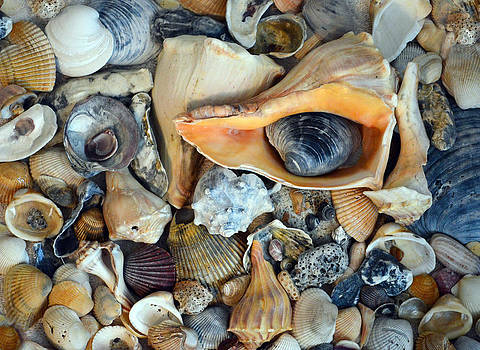 Shell Collection by Sandi OReilly