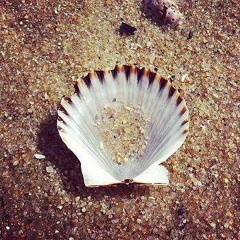 Shell by Steve Garfield