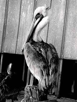 Shem Creek Pelican by Lyn Calahorrano