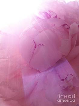 Shine by Caroline Ferrante
