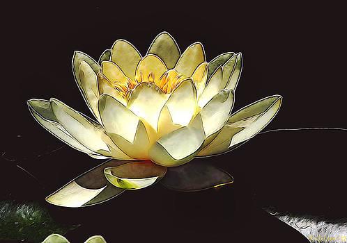 Shining lily by Desislava Kulelieva