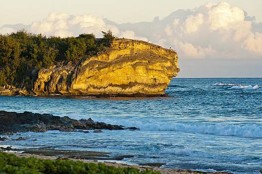 Shipwreck Beach Gold by Jen Morrison