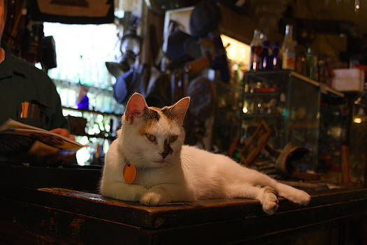 Shopkeepers Cat by Anthony Wilder