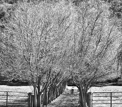 Short Path by Mariola Szeliga