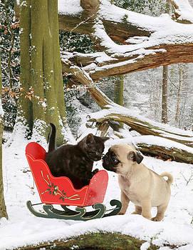 Jane Burton - Shorthair Kitten And Pug