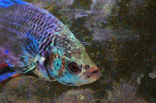 Siamese Fighting Fish by Balram Panikkaserry