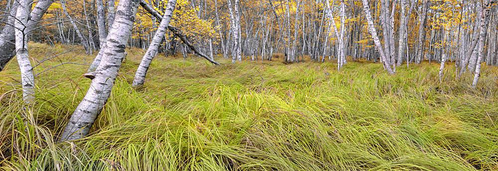 Thomas Schoeller - Sieur de Monts Forest - Acadia National Park