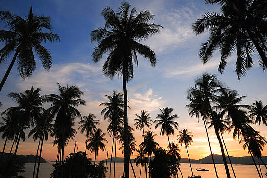 Silhouette Of  Coconut Tree by Teerapat Pattanasoponpong