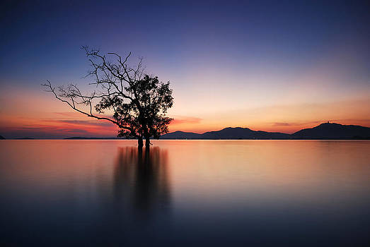 Silhouette of trees by Teerapat Pattanasoponpong