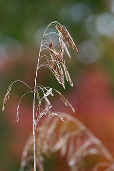 Simple Nature by Brady D Hebert
