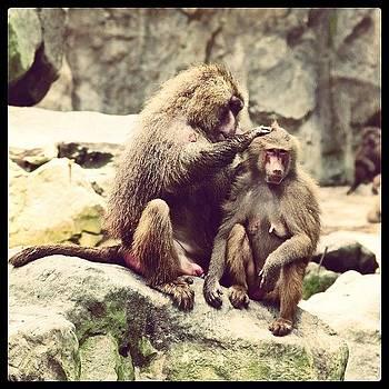 Singapore Zoo by Dani Pimenta