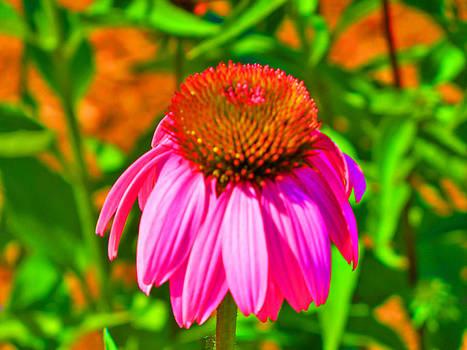 Single Flower by Shirley OBrien