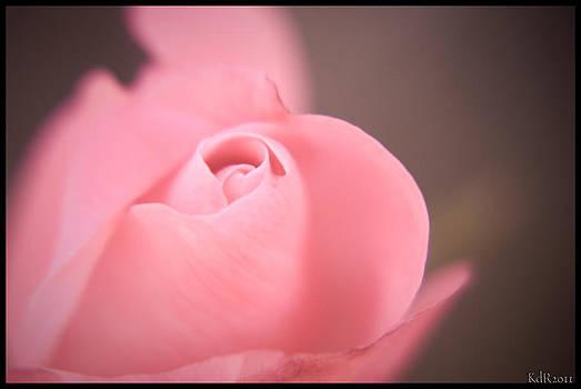 Single Pink Rose by Kelly Rader