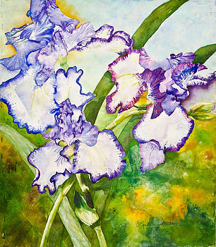 Sisterhood of the Purple Iris by Linda Broome