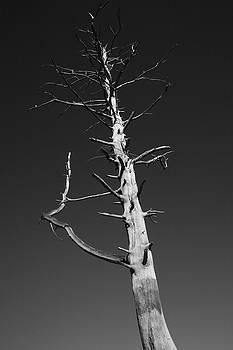 Skeleton Tree by Maglioli Studios
