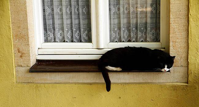 Sleeping Black Cat by Kelsey Horne