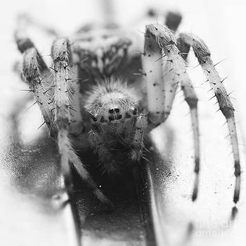 Darcy Michaelchuk - Small Alberta Spider