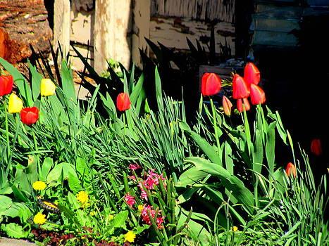 Small Garden by Amy Bradley