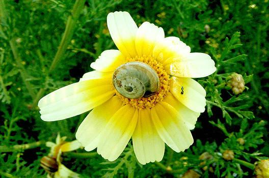 Snail by Simona Schirinzi