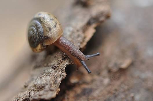Snail's Tale by Joan Kerns