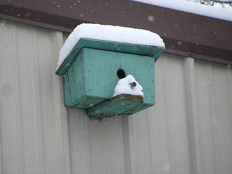 Snow Covered Bird House  by Amy Bradley