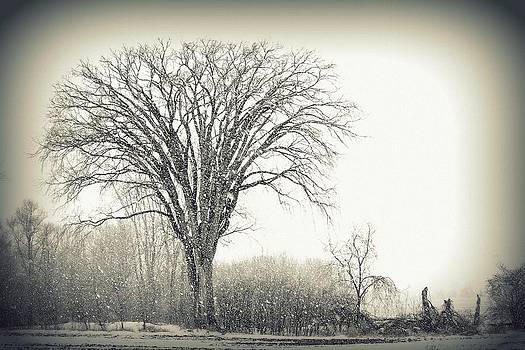 Snow Falling on Elm by Amy Schauland
