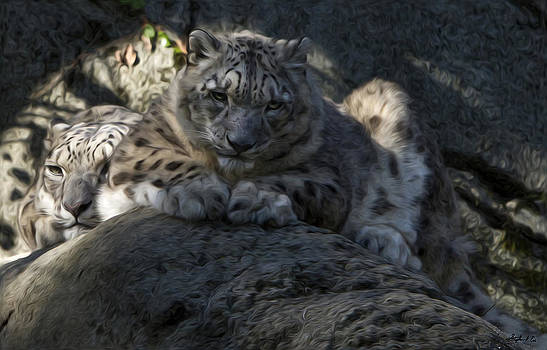 Snow Leopard Duo by Stephen EIS