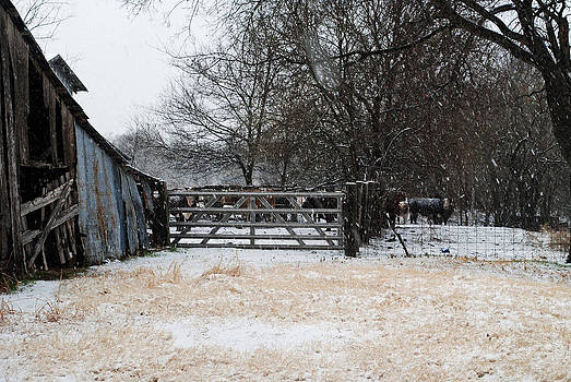 Snow on the Farm by Lisa Moore