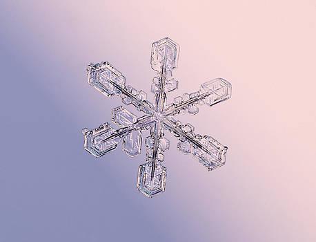 Tom Biegalski - Snowflake 1