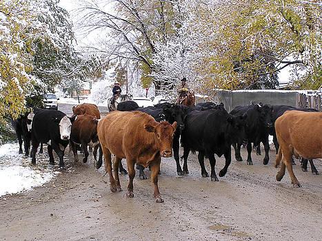FeVa  Fotos - Snowy Cattle Drive