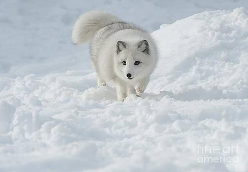 Sandra Bronstein - Snowy Day Stroll