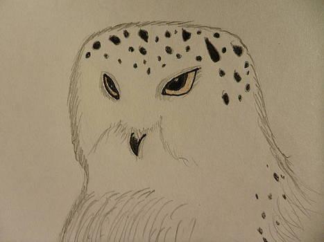 Snowy Owl by Emily Lambert