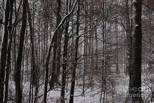 Linda Knorr Shafer - Snowy Woods
