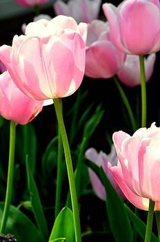 So Precious In Pink.... by Tanya Tanski
