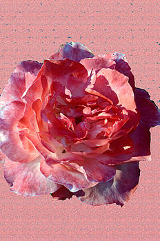 So Pretty In Pink.... by Tanya Tanski