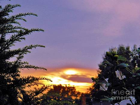 Judy Via-Wolff - Soft Sunset
