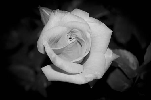 Soft Velvet by Teresa Dixon