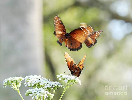 Soldier Butterflies Aflutter by Theresa Willingham