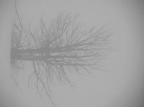 FeVa  Fotos - Solitude