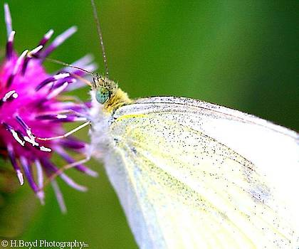 Speckled Wings by Heather  Boyd